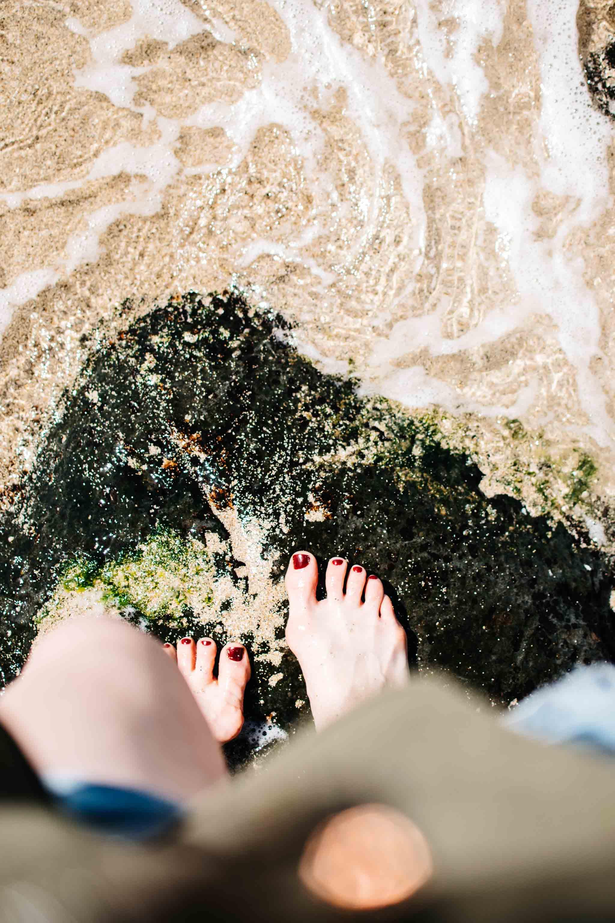 seaweed ocean maui