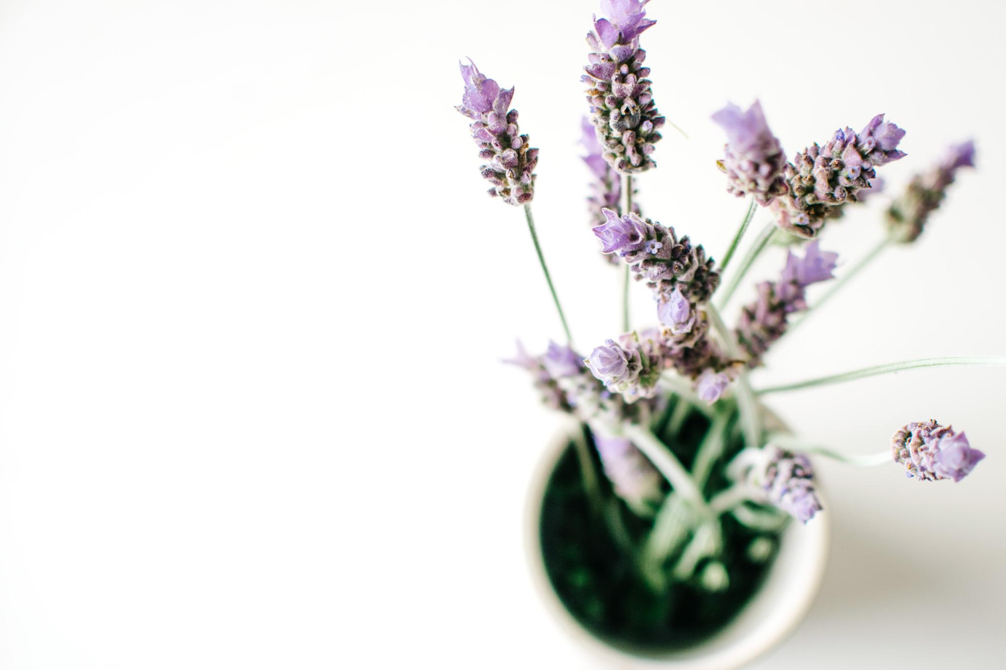 Αποτέλεσμα εικόνας για Lavender